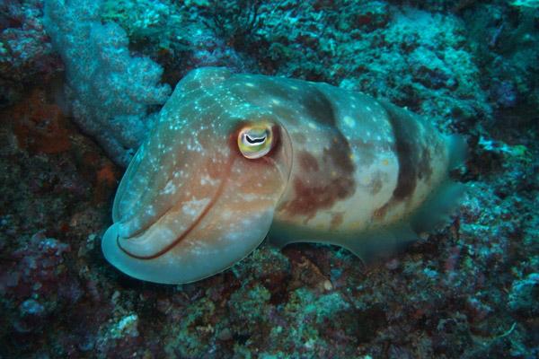 Diving Activities, Baruna Villas, Gili Trawangan, lombok - Indonesia.